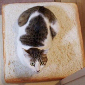 Cat Toast Bed