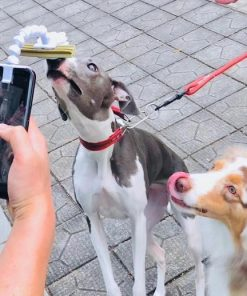 BriteDoggie Pet Selfie Stick
