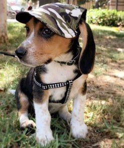 Custom Made Machiko Dog Hats… ADORABLE!