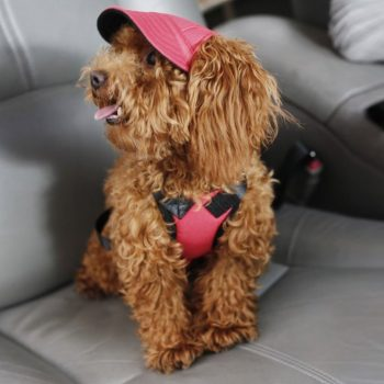 Custom Made Machiko Dog Hats… ADORABLE!